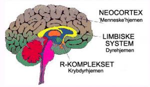 Krybdyrhjernen bestemmer over mere end du tror!